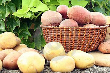 Comprar Patata
