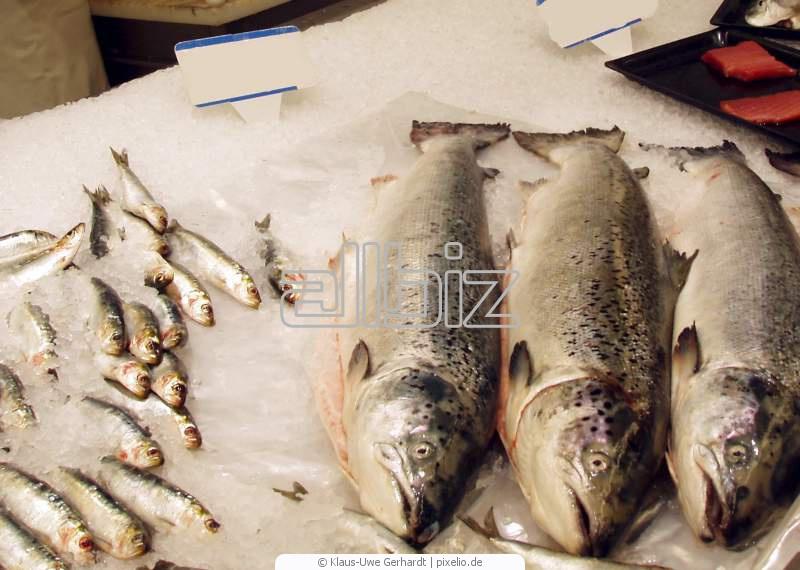 Comprar Pescado congelado