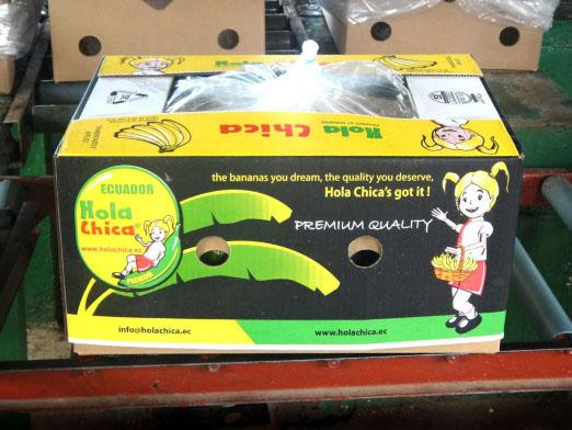 Comprar Hola Chica Cavendish Banana