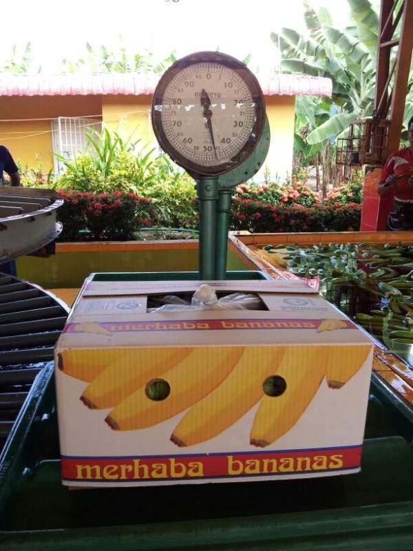 Comprar Bananas Cavendish