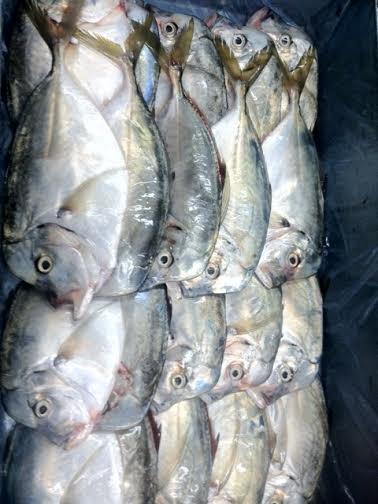 Comprar Moonfish