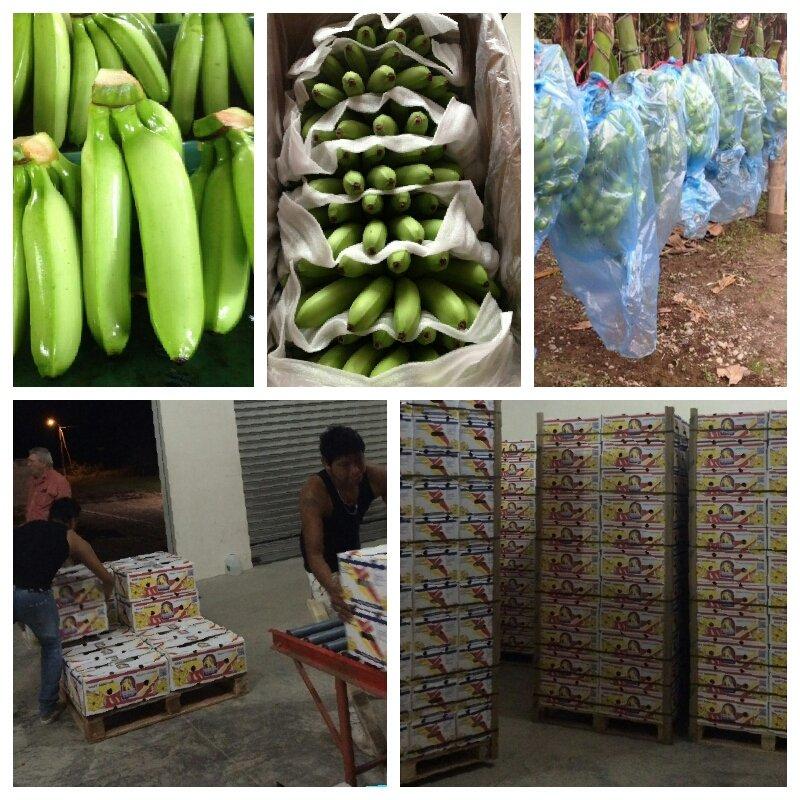 Comprar Baby Bananas