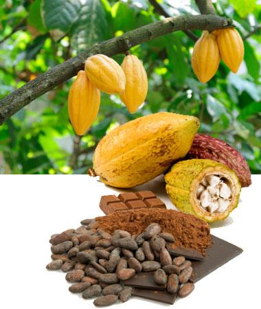 Comprar Cacao