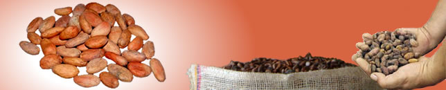 "Comprar Cacao ""fino o de aroma"""