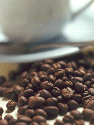 Comprar Café Arábigo lavado, Arábigo natural y Robusta