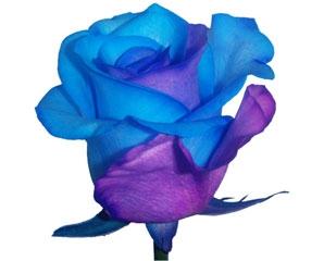 Comprar Tinted Roses
