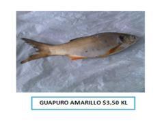 Guapuro Amarillo
