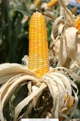 Bocaditos de maiz
