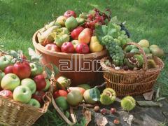 Frutas congelados