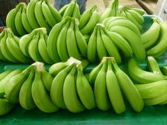 Бананы Премиум класса с Эквадора