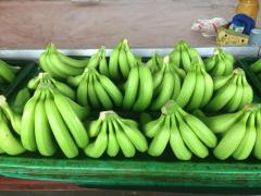 Cavendish, banana