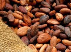 Cacao fino de aroma