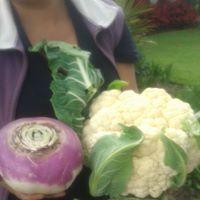 Abono orgánico (compost), Bajo costo, Mejor producción
