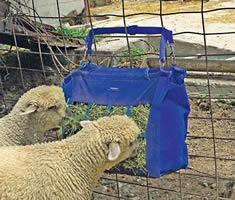 Equipos para ovejas y llamas