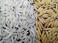 Semillas Certificadas de Cultivo de Arroz