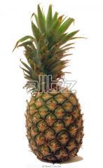 Piña natural Dusal