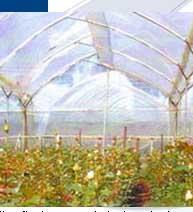 Cuerdas para la Estructura de Invernaderos