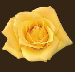 Rosa Aaslmer