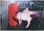 Alimentadores para cerdo y ganado