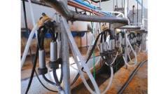 Maquinaria para industria láctea Marca Tecnical
