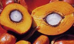 Aceite de palmiste