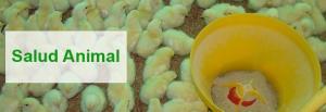 Productos balanceados para pollos, cerdos y