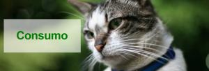 Artículos para preservar la salud de las mascotas