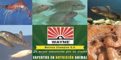 Alimentos balanceados para acuacultura Wayne