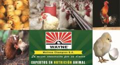 Alimentos balanceados Avicultura Wayne