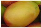 Mango Haden, Tommy Atkins, Keitt y Kent