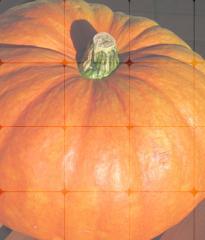 Pumpkin Flour