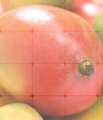 Polvo de Mango Confoco®