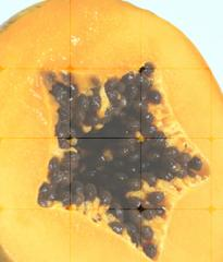 Polvo de papaya
