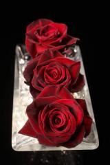 "Rosas Rojas ""Black Baccara"""