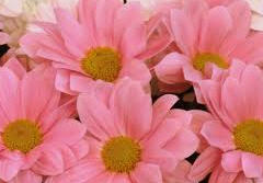 Flores vivas