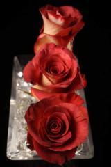 "Rosas Bicolores ""Leonidas"""