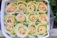 """Rosas de color crema """"La Perla"""""""