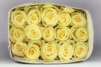 """Rosas de color crema """"Takini"""""""
