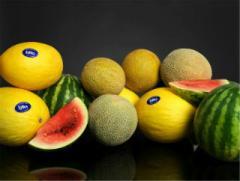 Fyffes Melons