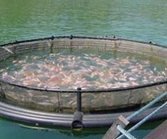 Línea de alimentos piscicolas  Aguas frías