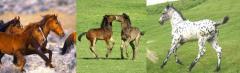 Alimento extruido para alimentar caballos  en