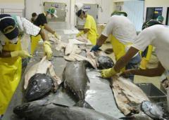 Escolar- Oilfish In Fillets