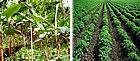 Productos Químicos para Industria Agricola