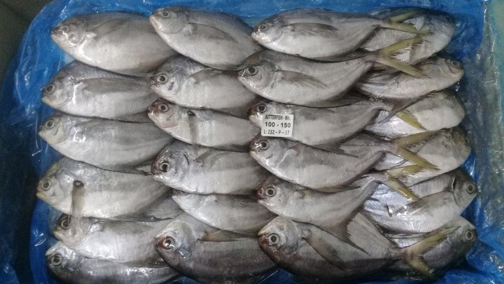 pampano_butterfish