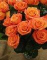 Розы, гвоздики, шабо, гипсофилу, астромелию