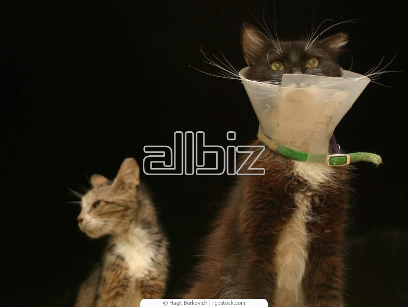 Pedido Servicios veterinarios