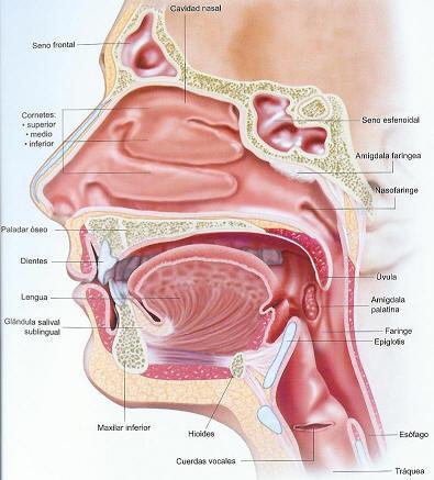 Pedido Cirugia de cabeza