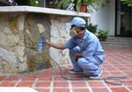 Pedido Servicio adicional de pintura