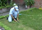 Pedido Diseño y mantenimiento de jardínes