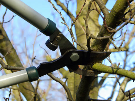 Pedido La Poda de Árboles y Arbustos